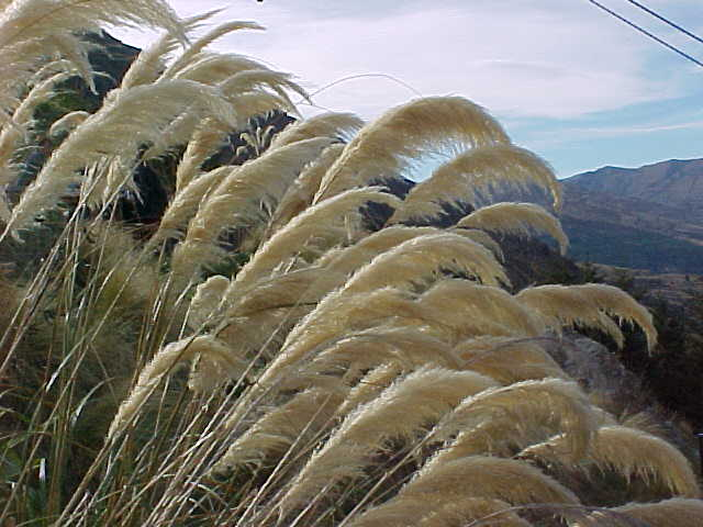 More allergy plants (New Zealand, The Travel Addicts, South Island)