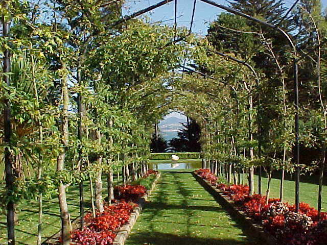A view down the corridor in the center of a hedge covered path (New Zealand, The Travel Addicts, South Island)