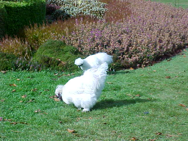 A big white chicken (New Zealand, The Travel Addicts, South Island)