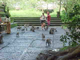 Kim Pichler surrounded by the monkeys in Ubud's Monkey Temple