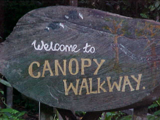 Welcome to the canopy walkway : The canopy walkway was a series of suspension bridges from tree to tree up in the crown of the forest.  The idea was to let you see the different biosphere in the canopy of the forest. (Malaysia, The Travel Addicts)