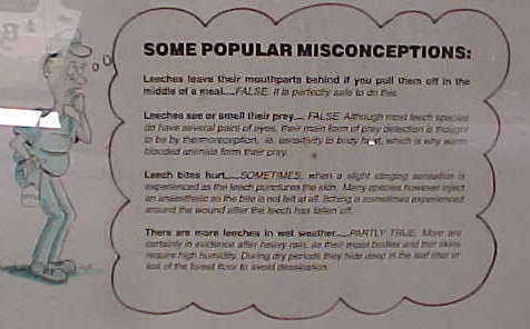 Some Popular Misconceptions: : Leeches leave their mouthparts behind if you pull them off in the middle of a meal - FALSE.  It is Perfectly OK to do this.Leeches scent or smell their prey - FALSE (can't read the explanation, but remember from the guide that they sense body heat).Leach Bites hurt - SOMETIMES (again cannot read image; but remember from the guide that some species saliva includes an anesthetic).There are more leeches in wet weather - PATRTLY TRUE More are certainly in evidence after a heavy rain. (cannot read the rest).