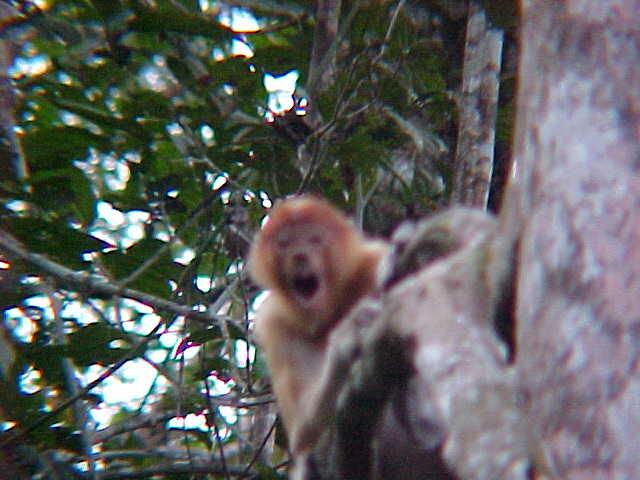 Screamer! : I got too close (Malaysia, The Travel Addicts)