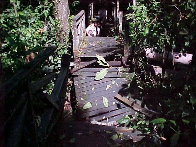 MVC-859S-Bridge out!. Sepilok Orangutan Rehabilitation Centre, Sabah, Malaysia (The Travel Addicts, Malaysia)