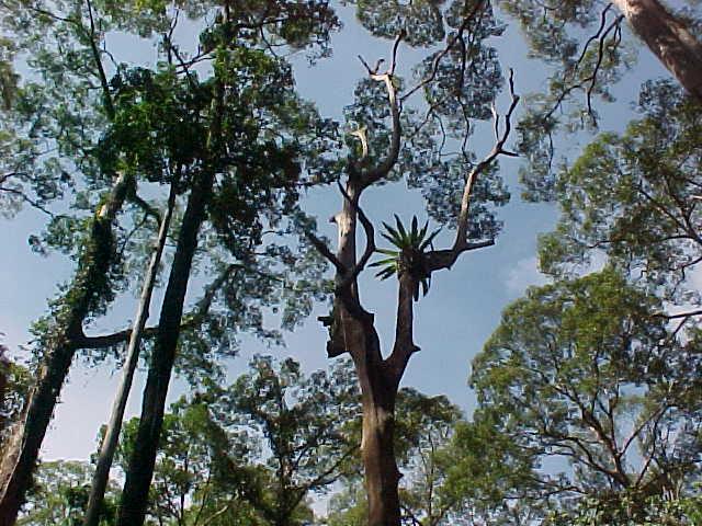 MVC-867S-Tree. Sepilok Orangutan Rehabilitation Centre, Sabah, Malaysia (The Travel Addicts, Malaysia)