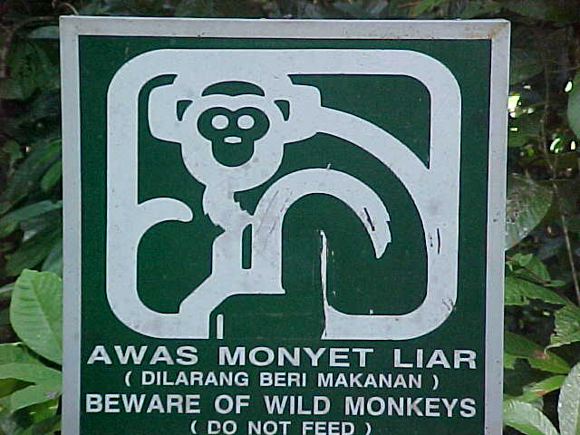 "MVC-870S-Anti-macaque propoganda. Sepilok Orangutan Rehabilitation Centre, Sabah, Malaysia: Sign reads: ""Awas monyet liar (Dilarang beri makanan)""/ We took this to mean: ""Always monkeys lie (they're doing funny things with berries)"" but it actually means: ""Beware of wild monkeys (do not feed)/ Good advice, as the Macaques were total bastards and aggresive as hell. (The Travel Addicts, Malaysia)"