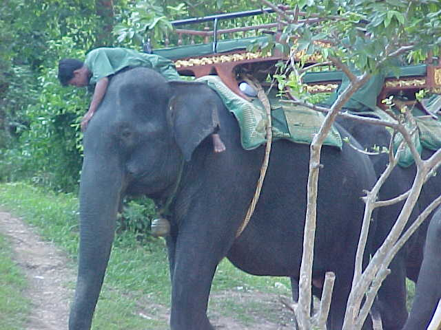 Elephant ride to hilltop :  (Cambodia, The Travel Addicts)