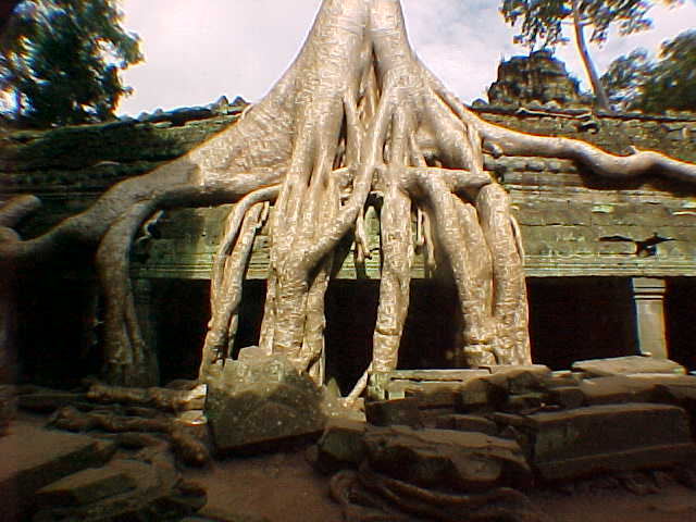 Balsa trees overgrowing Ta Phrom (Cambodia, The Travel Addicts)