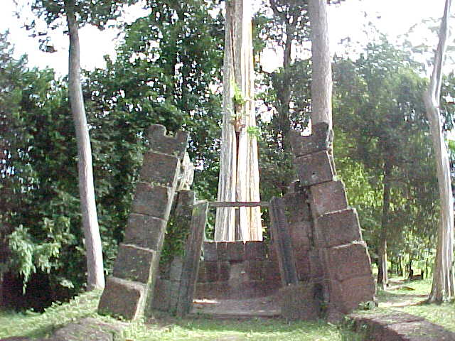 Tree growing out of a temple :  (Cambodia, The Travel Addicts)