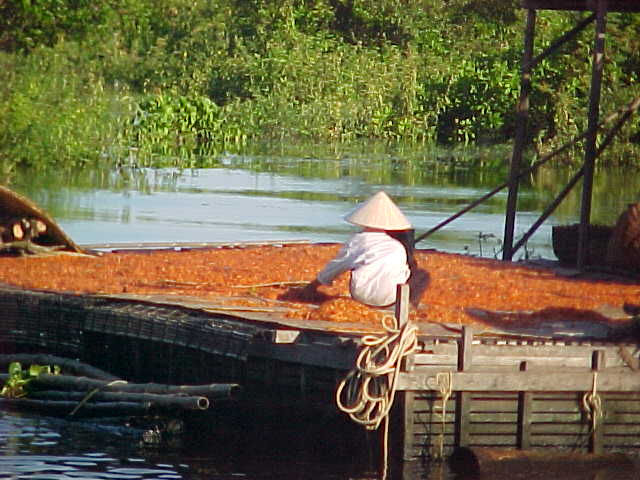Sun dried chilis : In the rest of the third world you see peasants drying food (rice, coffee, etc) on roadbeds, as they are convienently flat and clear of vegetation.  Here there is no road, so a barge will do. (Cambodia, The Travel Addicts)