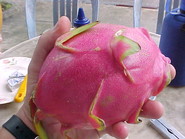 The delicious dragon fruit (Vietnam, The Travel Addicts)