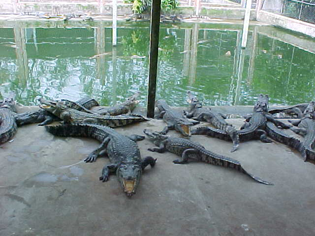 Crocs (Vietnam, The Travel Addicts)