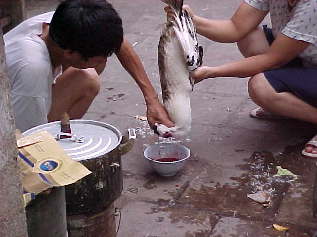 Fowl slaughter : Hey Bolton and Durwood! Here's the correct way to slaughter a chicken... (Vietnam, The Travel Addicts)