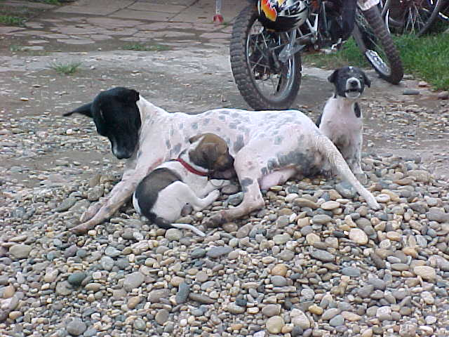 Nursing dog (Laos, The Travel Addicts)
