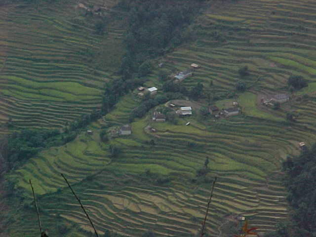 Rice terraces of Siding (Nepal, The Travel Addicts)