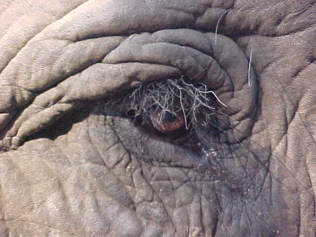 Elephant eye : The eye of wisdom (Nepal, The Travel Addicts)