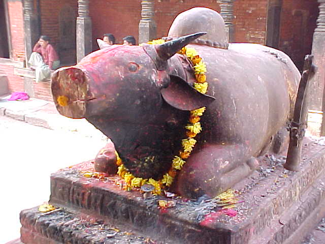 Shiva's Vehicle : A smiling Brahma Bull \  (Nepal, The Travel Addicts)