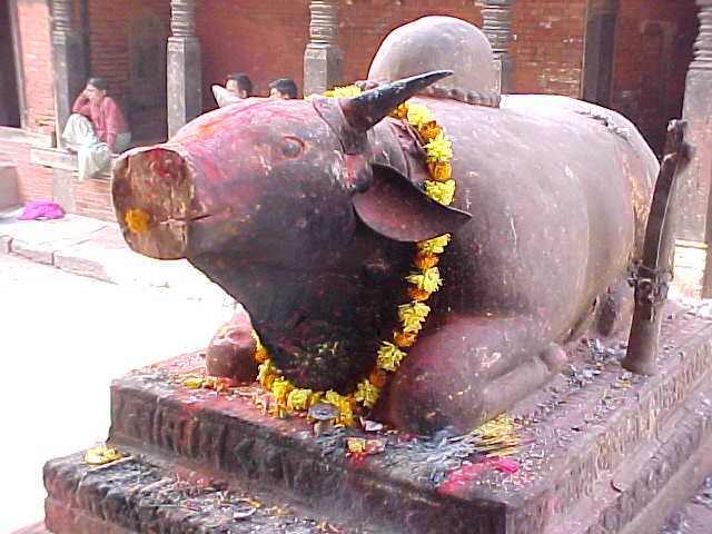 Shiva's Vehicle : A smiling Brahma Bull \  (Nepal, The Travel Addicts)