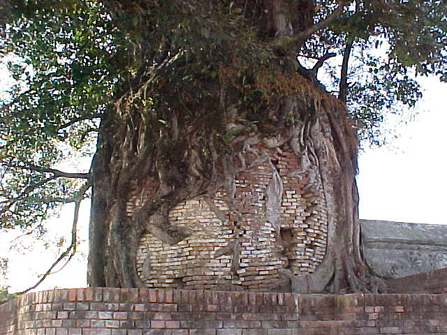 Interesting roots (Nepal, The Travel Addicts)