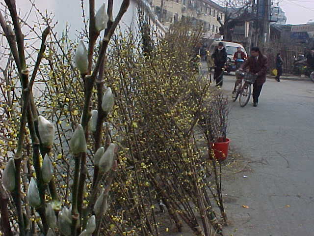 MVC-143S-Willow fronds. , Chengdu, Sichuan Sheng, China (成都, 四川省, 中国) (The Travel Addicts, China)