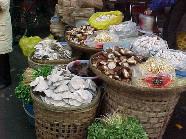 MVC-148S-Shrooms. , Chengdu, Sichuan Sheng, China (成都, 四川省, 中国) (The Travel Addicts, China)