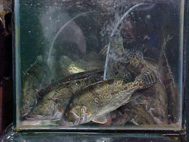 MVC-150S-Fish does not get any fresher. , Chengdu, Sichuan Sheng, China (成都, 四川省, 中国) (The Travel Addicts, China)