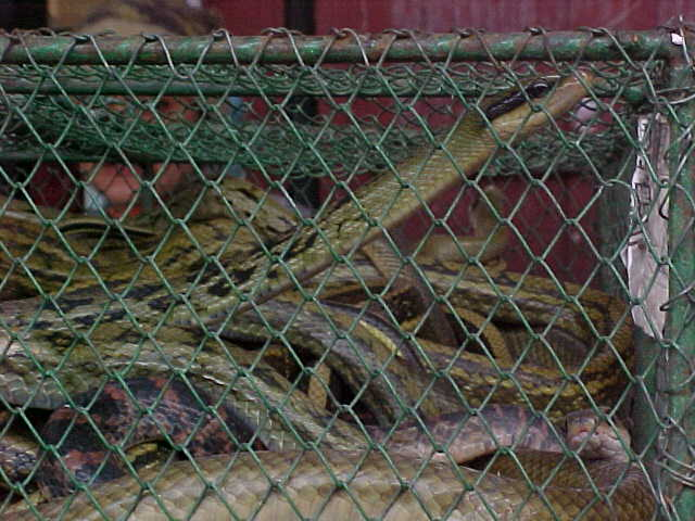 MVC-153S-Snakes. , Chengdu, Sichuan Sheng, China (成都, 四川省, 中国) (The Travel Addicts, China)