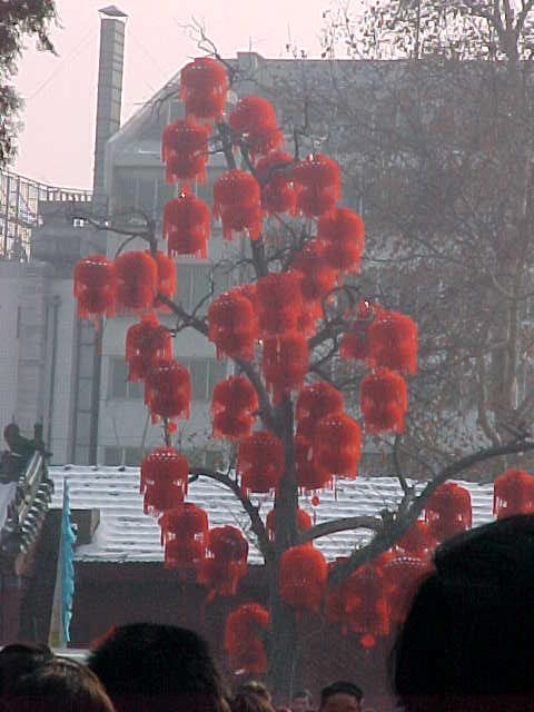 MVC-188S-Decorated tree. , Beijing, Beijing Shi, China (北京, 北京市, 中国) (The Travel Addicts, China)
